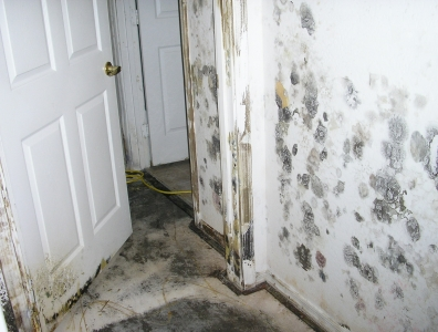 Do I Have Toxic Mold Or Black Symptoms