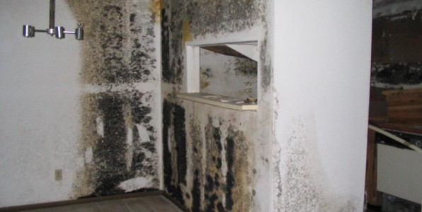 Mold Removal Orange County