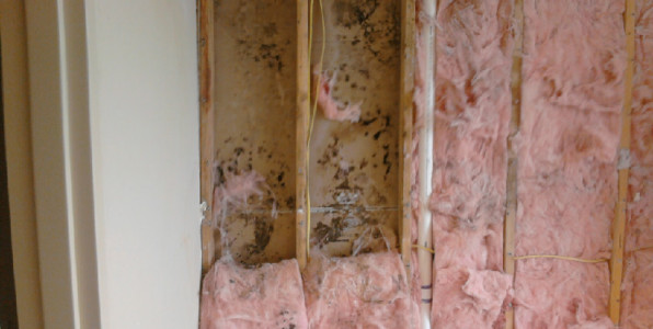 orange county mold removal, mold remediation orange county, mold removal from drywall, remove mold from drywall,