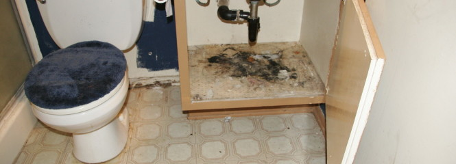 Aliso Viejo Mold Removal, Mold Removal Estimate, Mold Remediation