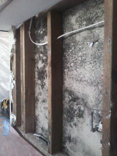 Mold Remediation Orange County