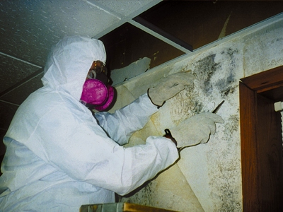 mold inspection orange county