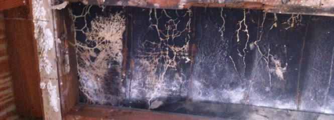 Portola Hills Mold Remediation