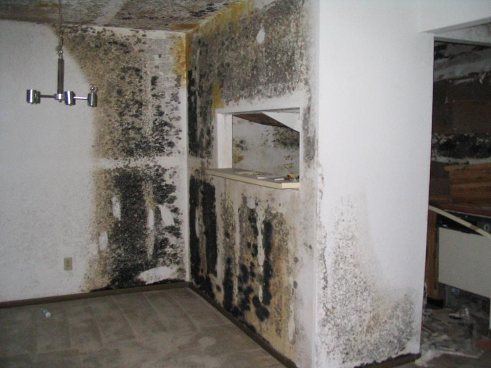Safe Black Mold Removal in Orange County CA | Gregory Restoration